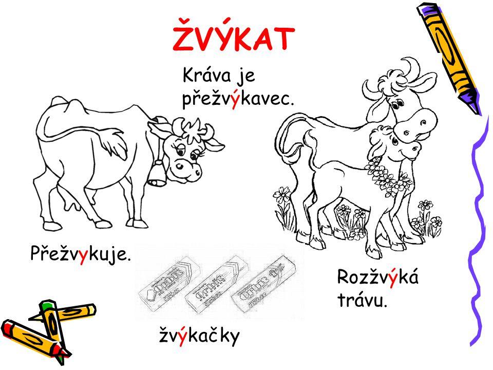 ŽVÝKAT Kráva je přežvýkavec. Rozžvýká trávu. Přežvykuje. žvýkačky