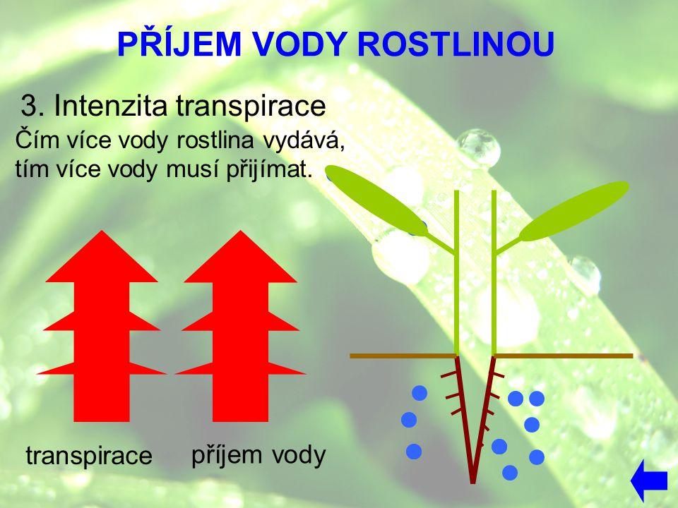 PŘÍJEM VODY ROSTLINOU 3. Intenzita transpirace transpirace příjem vody Čím více vody rostlina vydává, tím více vody musí přijímat.
