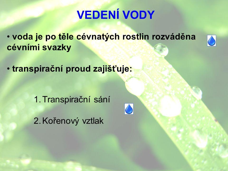 VEDENÍ VODY voda je po těle cévnatých rostlin rozváděna cévními svazky transpirační proud zajišťuje: 1.Transpirační sání 2.Kořenový vztlak