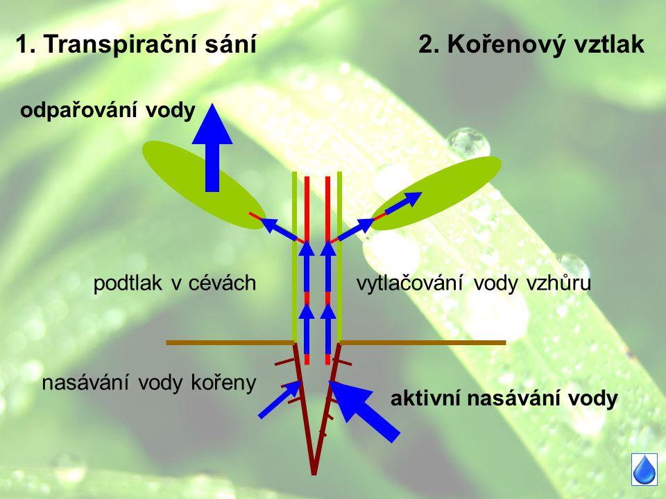 1. Transpirační sání2. Kořenový vztlak odpařování vody podtlak v cévách nasávání vody kořeny aktivní nasávání vody vytlačování vody vzhůru