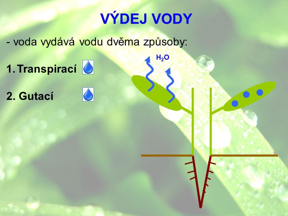 1.Transpirací 2. Gutací H2OH2O VÝDEJ VODY - voda vydává vodu dvěma způsoby: