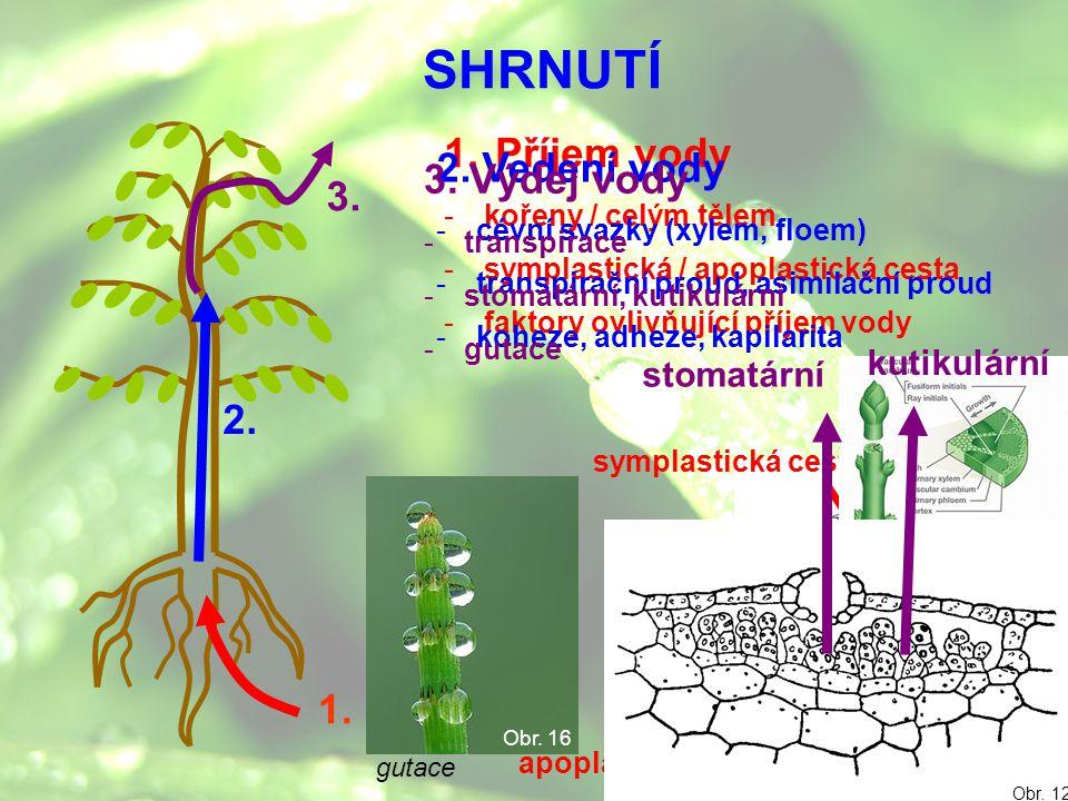 SHRNUTÍ 1. Příjem vody -kořeny / celým tělem -symplastická / apoplastická cesta -faktory ovlivňující příjem vody 1. 2. 3. gutace Obr. 16 Obr. 14 sympl