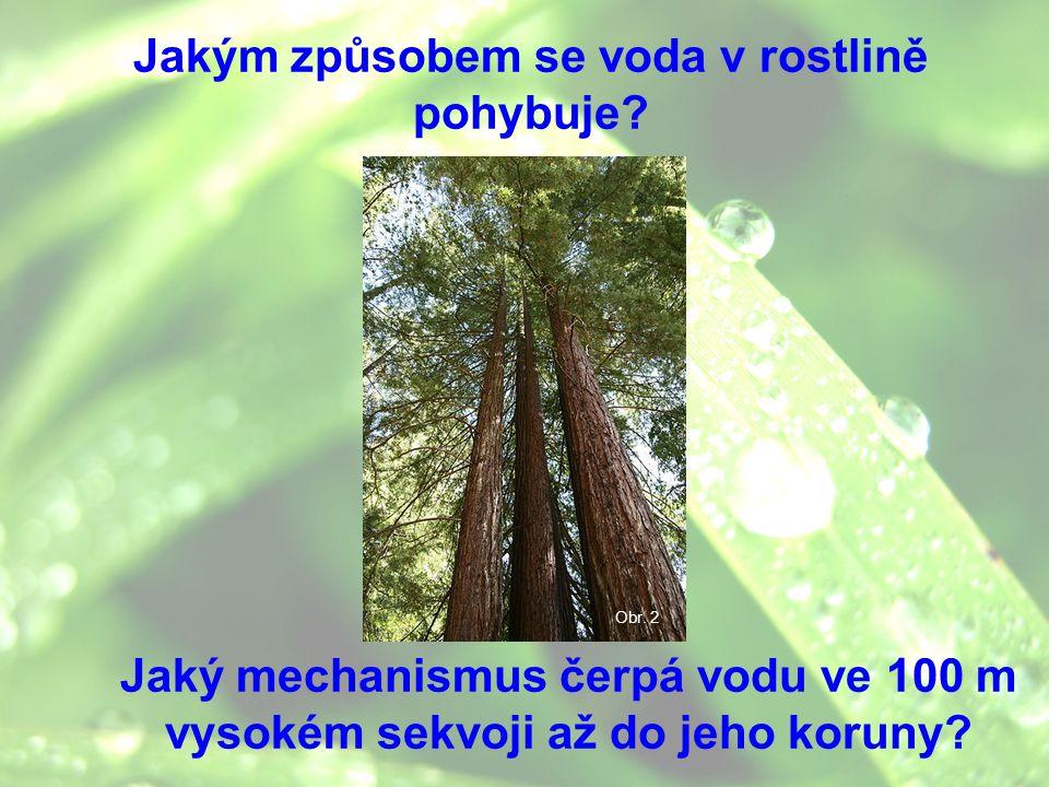 Jakým způsobem se voda v rostlině pohybuje? Jaký mechanismus čerpá vodu ve 100 m vysokém sekvoji až do jeho koruny? Obr. 2