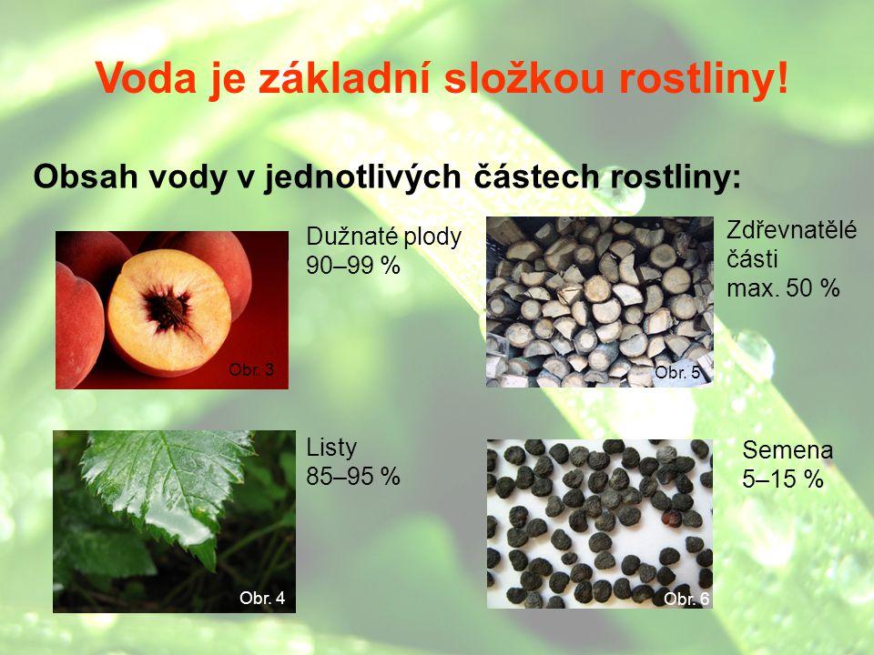 4 (nejmenší obsah vody) 3 2 1 (největší obsah vody) Voda je základní složkou rostliny! Obsah vody v jednotlivých částech rostliny: Obr. 5 Dužnaté plod
