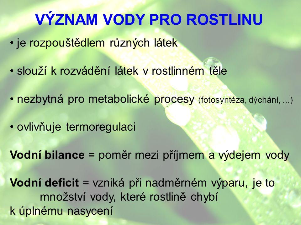 VÝZNAM VODY PRO ROSTLINU je rozpouštědlem různých látek slouží k rozvádění látek v rostlinném těle nezbytná pro metabolické procesy (fotosyntéza, dých