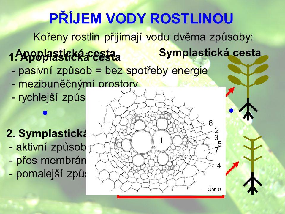 PŘÍJEM VODY ROSTLINOU Kořeny rostlin přijímají vodu dvěma způsoby: 1. Apoplastická cesta - pasivní způsob = bez spotřeby energie - mezibuněčnými prost