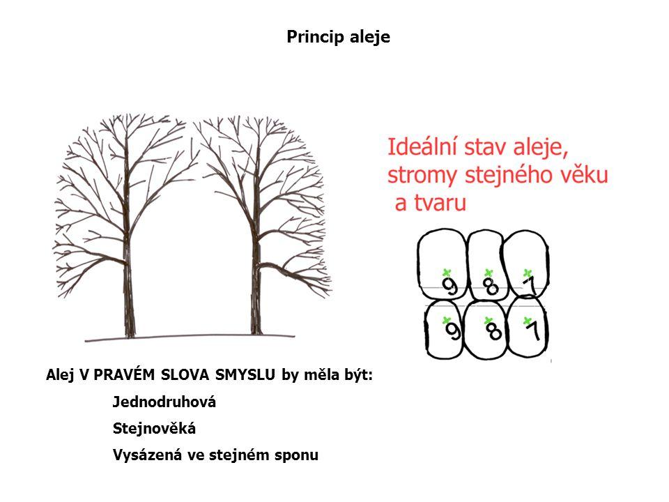 Princip aleje Alej V PRAVÉM SLOVA SMYSLU by měla být: Jednodruhová Stejnověká Vysázená ve stejném sponu