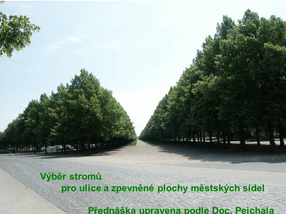 Výběr stromů pro ulice a zpevněné plochy městských sídel Přednáška upravena podle Doc. Pejchala