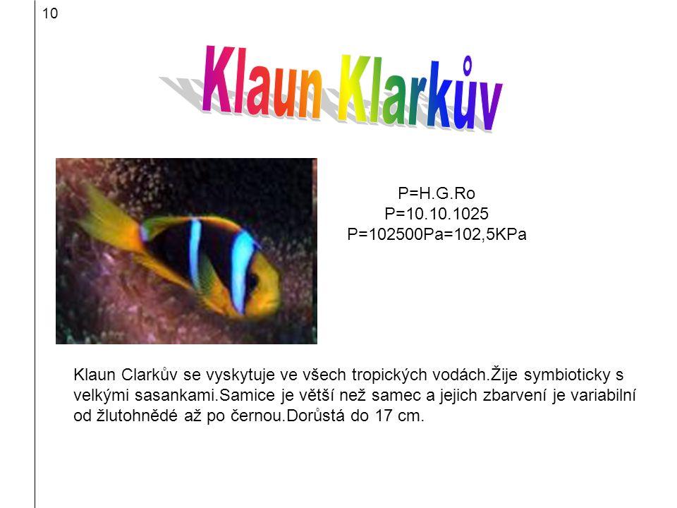 10 Klaun Clarkův se vyskytuje ve všech tropických vodách.Žije symbioticky s velkými sasankami.Samice je větší než samec a jejich zbarvení je variabiln