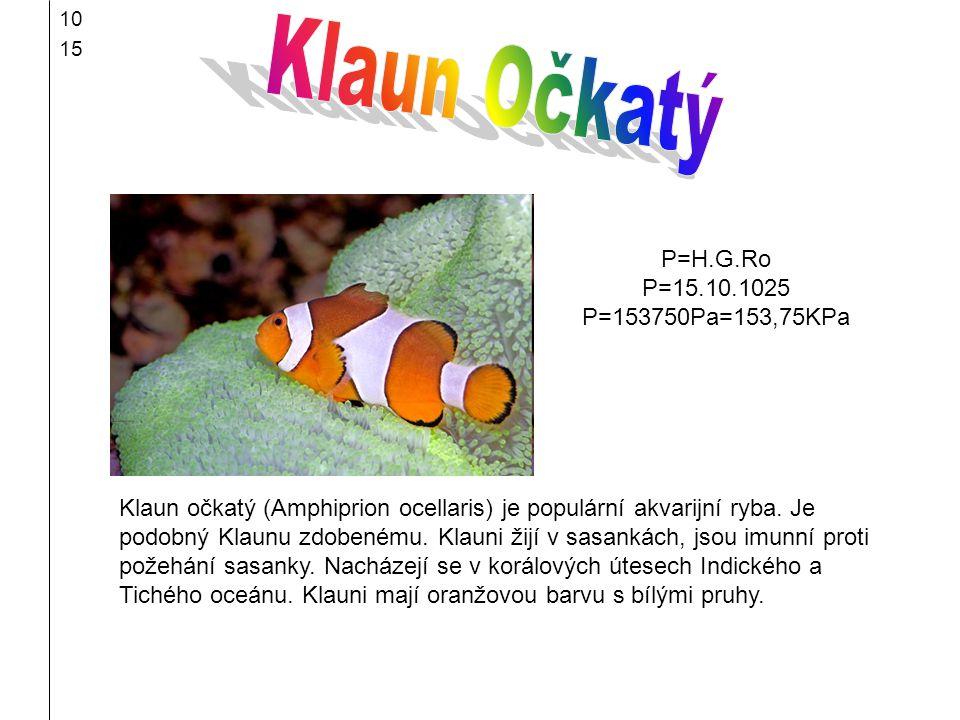 10 15 Klaun očkatý (Amphiprion ocellaris) je populární akvarijní ryba. Je podobný Klaunu zdobenému. Klauni žijí v sasankách, jsou imunní proti požehán