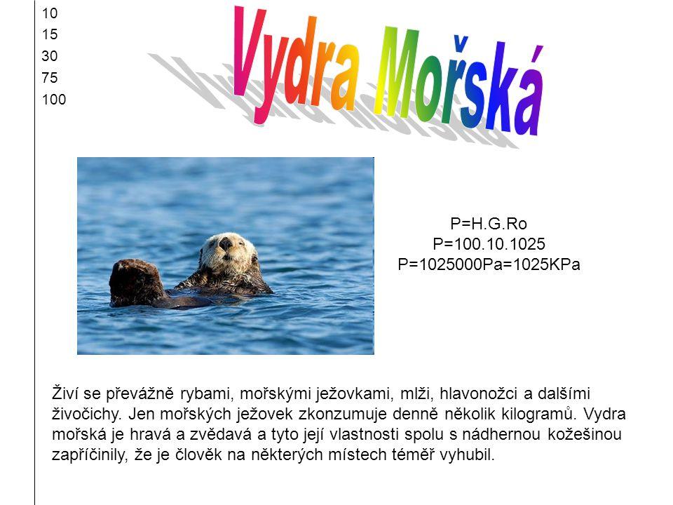 10 15 30 75 100 Živí se převážně rybami, mořskými ježovkami, mlži, hlavonožci a dalšími živočichy. Jen mořských ježovek zkonzumuje denně několik kilog