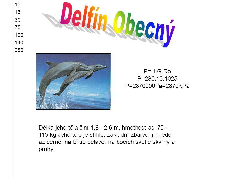 10 15 30 75 100 140 280 Délka jeho těla činí 1,8 - 2,6 m, hmotnost asi 75 - 115 kg.Jeho tělo je štíhlé, základní zbarvení hnědé až černé, na břiše běl