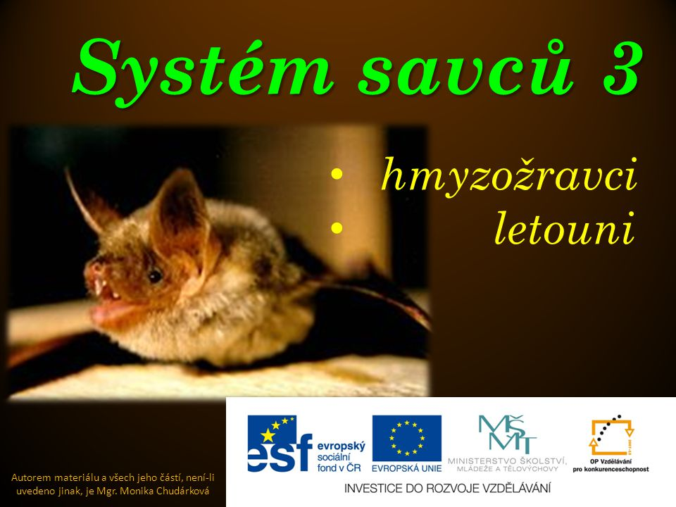 Systém savců 3 Autorem materiálu a všech jeho částí, není-li uvedeno jinak, je Mgr. Monika Chudárková hmyzožravci letouni