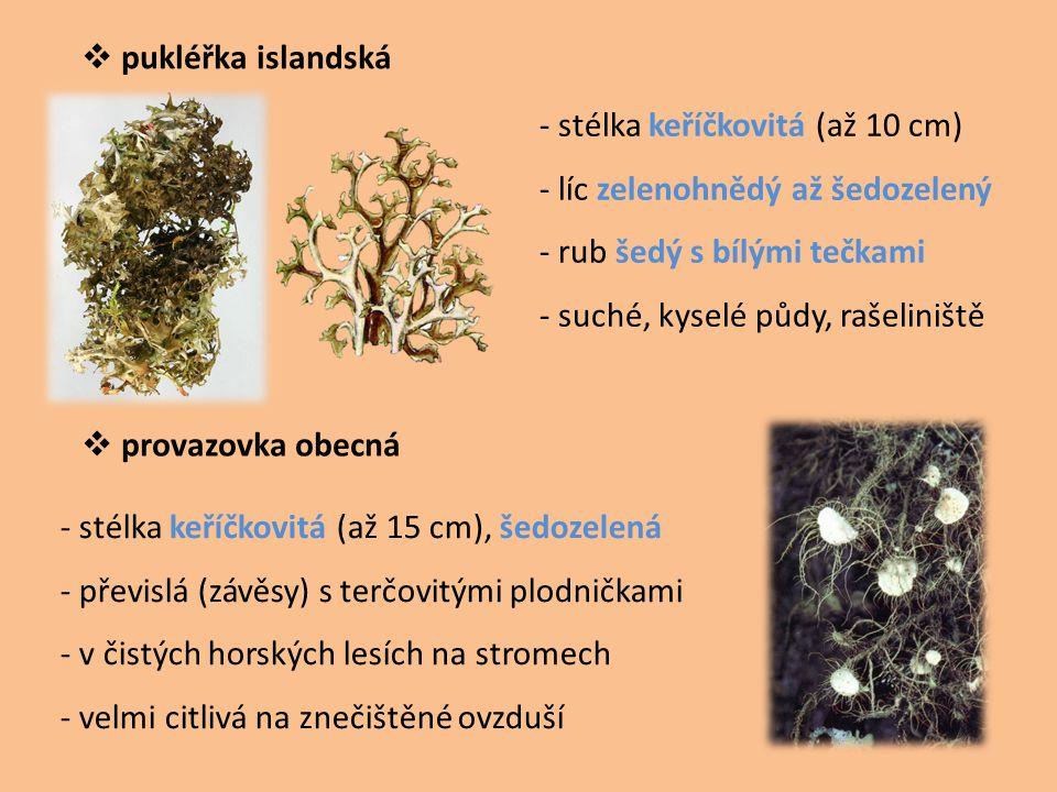  pukléřka islandská  provazovka obecná - stélka keříčkovitá (až 10 cm) - líc zelenohnědý až šedozelený - rub šedý s bílými tečkami - suché, kyselé půdy, rašeliniště - stélka keříčkovitá (až 15 cm), šedozelená - převislá (závěsy) s terčovitými plodničkami - v čistých horských lesích na stromech - velmi citlivá na znečištěné ovzduší