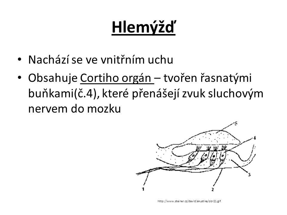 Hlemýžď Nachází se ve vnitřním uchu Obsahuje Cortiho orgán – tvořen řasnatými buňkami(č.4), které přenášejí zvuk sluchovým nervem do mozku http://www.steiner.cz/david/akustika/obr21.gif