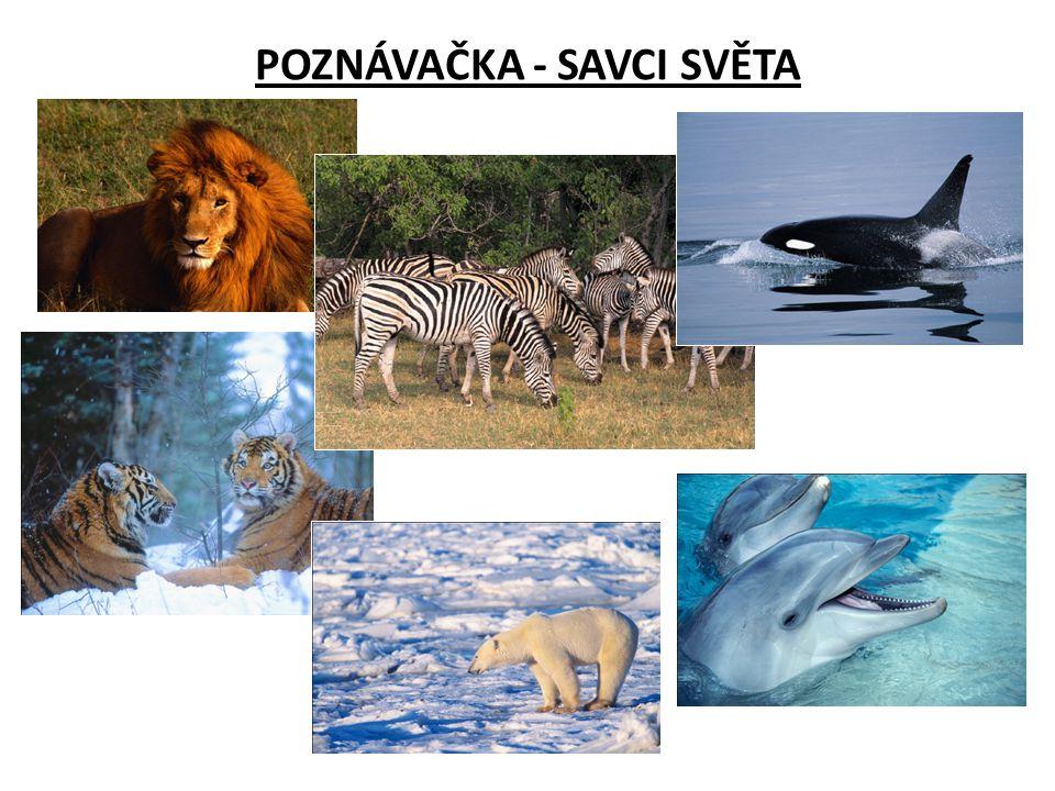 Do tabulky doplňte jména živočichů a zařaďte je do příslušného řádu.