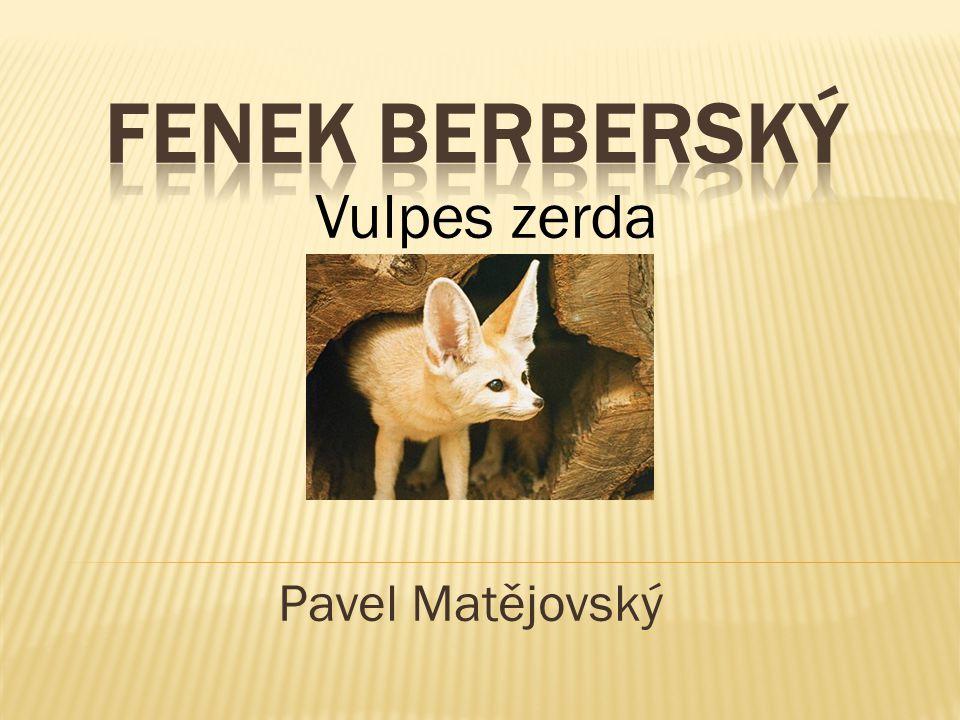 Pavel Matějovský Vulpes zerda