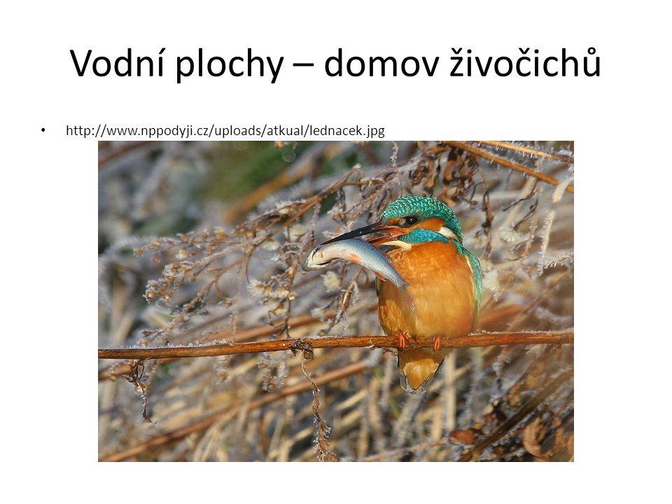 Vodní plochy – domov živočichů http://www.nppodyji.cz/uploads/atkual/lednacek.jpg