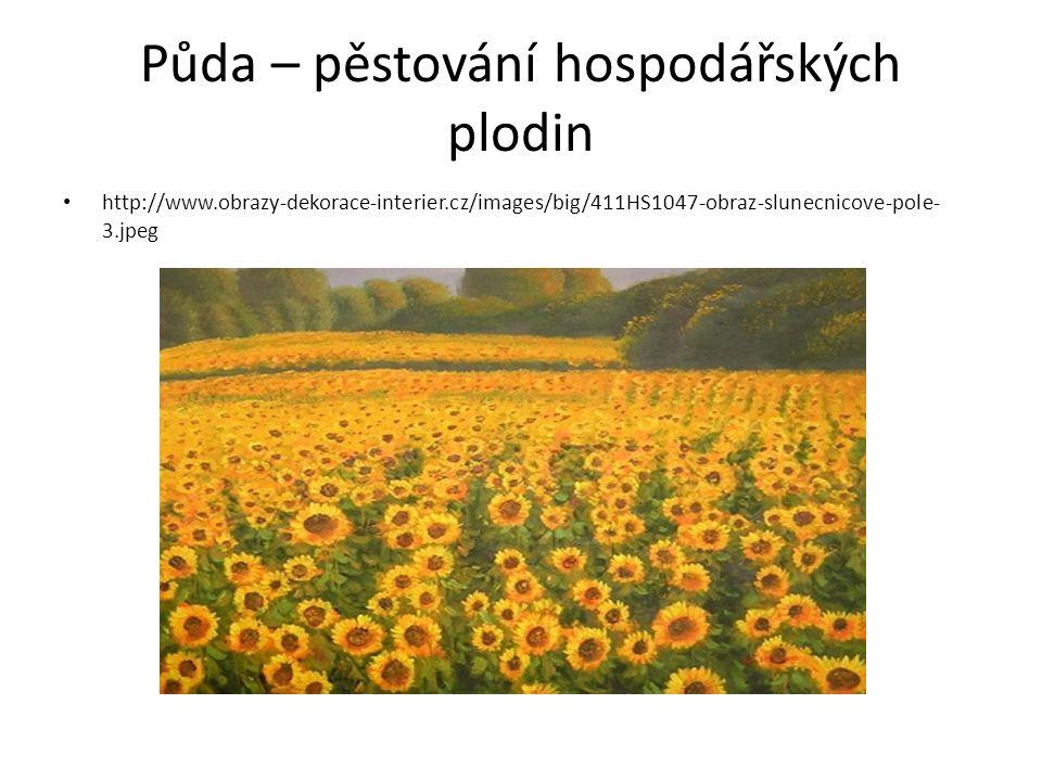Půda – pěstování hospodářských plodin http://www.obrazy-dekorace-interier.cz/images/big/411HS1047-obraz-slunecnicove-pole- 3.jpeg