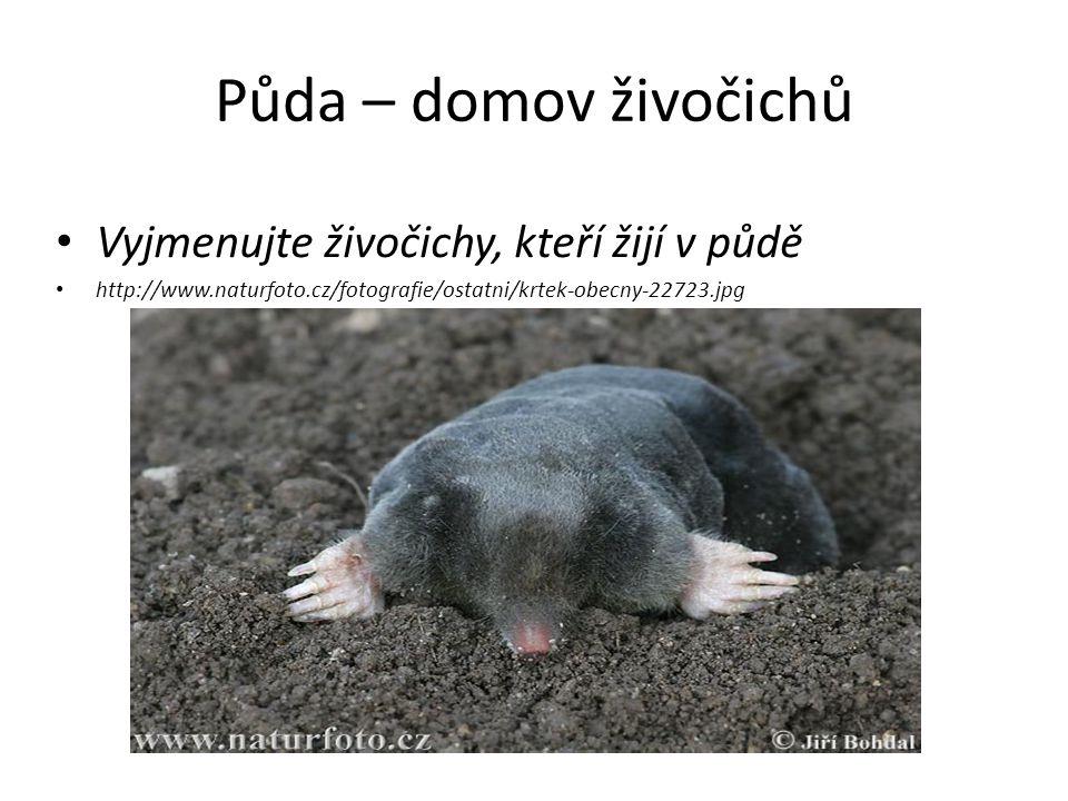 Půda – domov živočichů Vyjmenujte živočichy, kteří žijí v půdě http://www.naturfoto.cz/fotografie/ostatni/krtek-obecny-22723.jpg