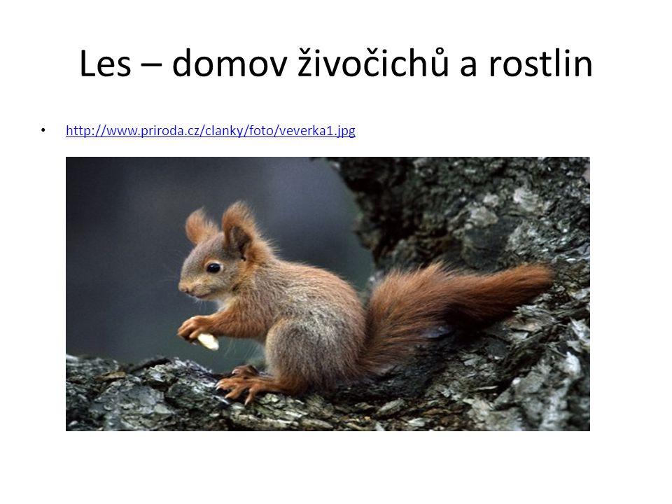 Les – domov živočichů a rostlin http://www.priroda.cz/clanky/foto/veverka1.jpg