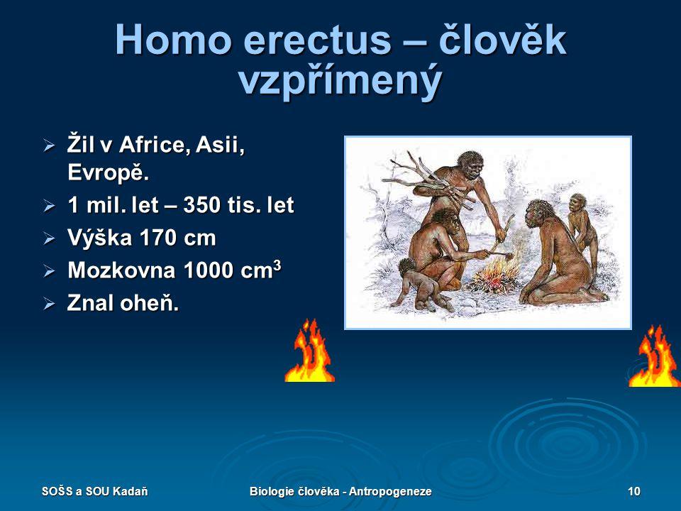 SOŠS a SOU KadaňBiologie člověka - Antropogeneze9 Homo habilis