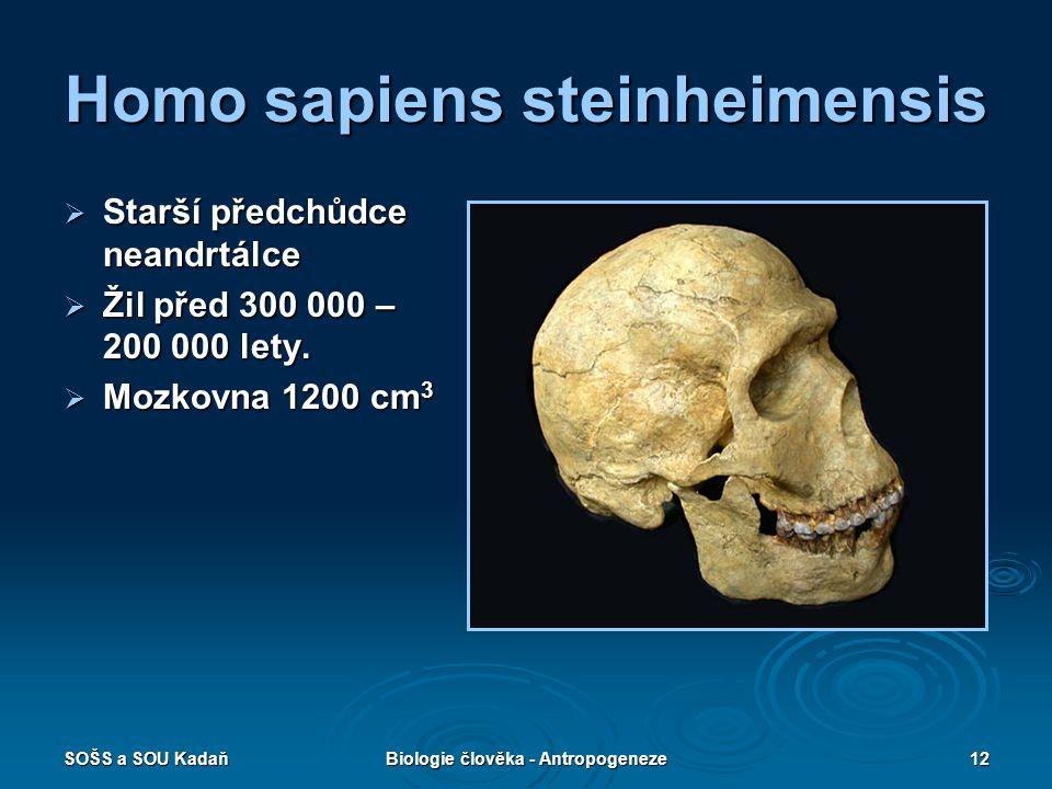 SOŠS a SOU KadaňBiologie člověka - Antropogeneze11 Homo erectus