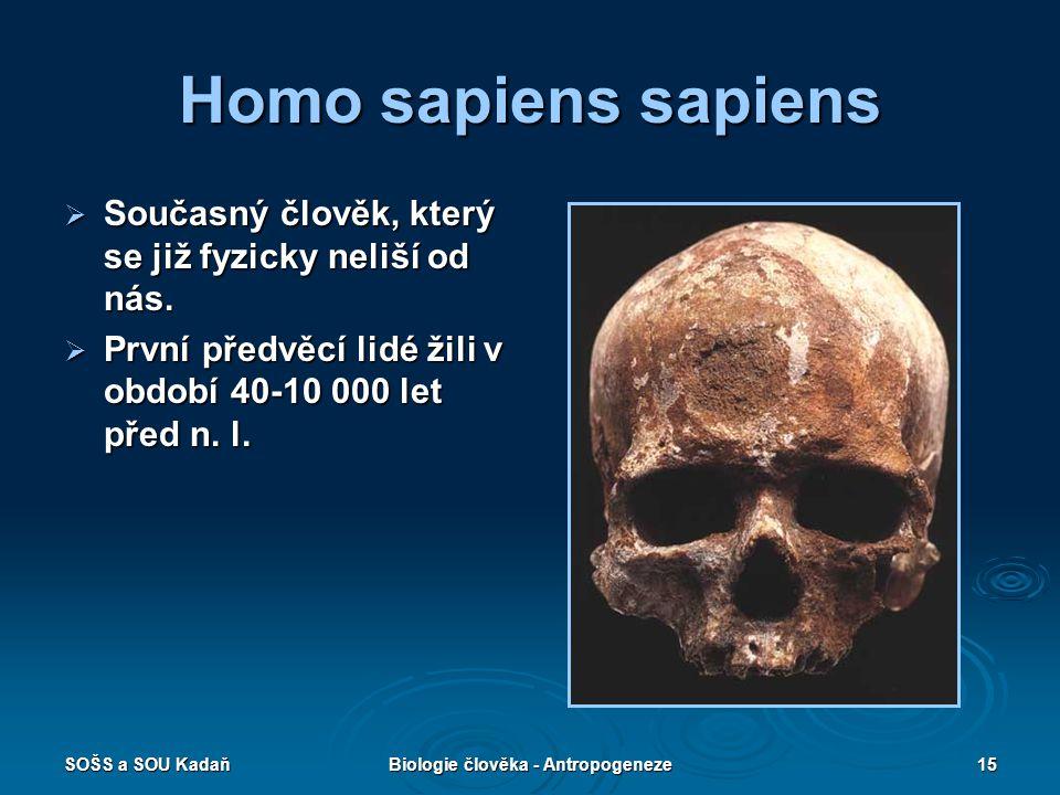 SOŠS a SOU KadaňBiologie člověka - Antropogeneze14 Homo neanderthalensis