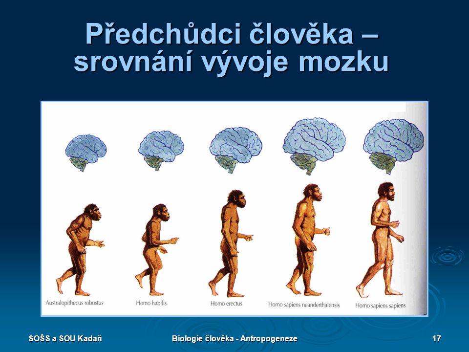 SOŠS a SOU KadaňBiologie člověka - Antropogeneze16 Malby předvěkého člověka v jeskyni Altamira Malby vznikly před 15 000 lety