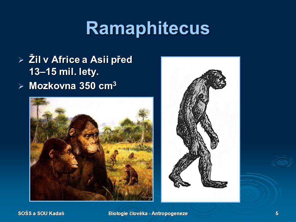 SOŠS a SOU KadaňBiologie člověka - Antropogeneze4 Vývojová linie rodu HOMO  Ramaphitecus – před 15 mil. lety  Australophitecus africanus – 3 mil. le