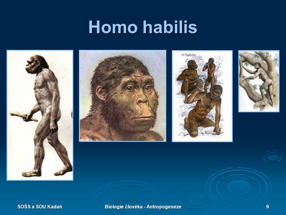 SOŠS a SOU KadaňBiologie člověka - Antropogeneze8 Homo habilis  Člověk zručný  První předek řazený do rodu HOMO.  Žil v Africe pře 2,5 až 1,5 mil.