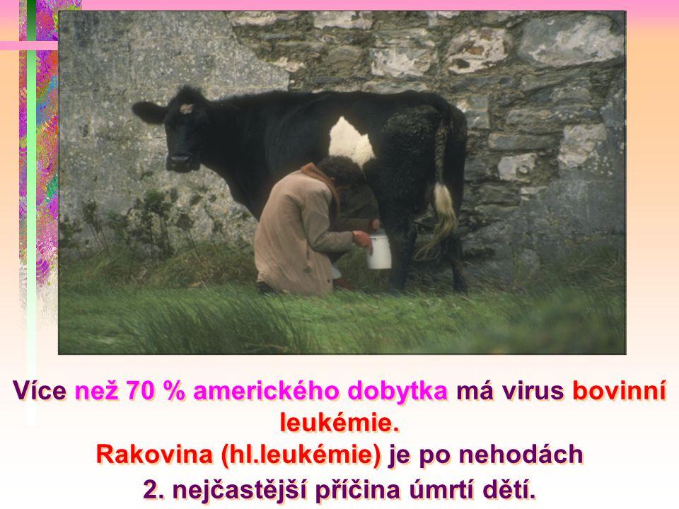 Více než 70 % amerického dobytka má virus bovinní leukémie. Rakovina (hl.leukémie) je po nehodách 2. nejčastější příčina úmrtí dětí.
