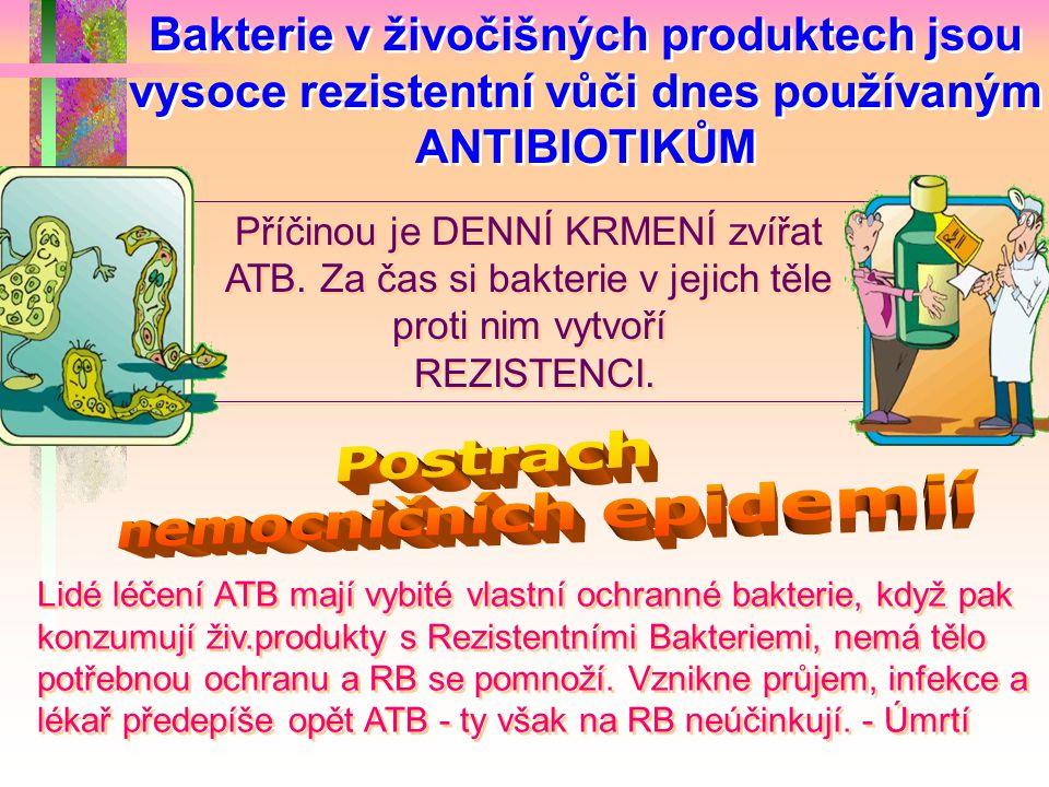 Bakterie v živočišných produktech jsou vysoce rezistentní vůči dnes používaným ANTIBIOTIKŮM Příčinou je DENNÍ KRMENÍ zvířat ATB. Za čas si bakterie v