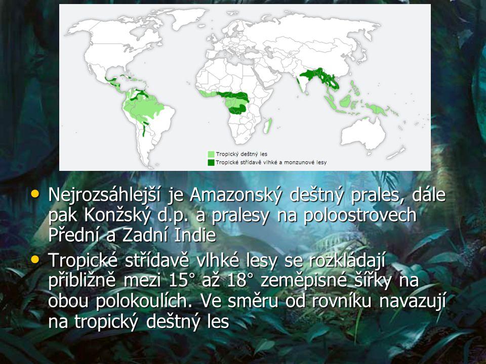 Nejrozsáhlejší je Amazonský deštný prales, dále pak Konžský d.p.