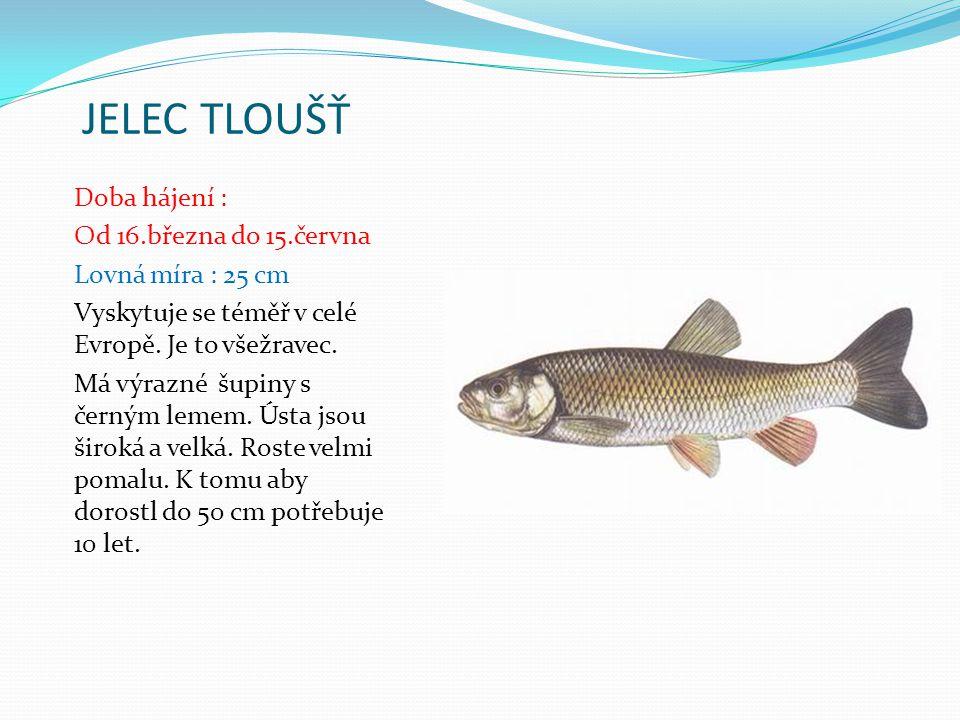 PODOUSTEV ŘÍČNÍ Doba hájení : Od 16.března do 15.června Lovná míra : 25 cm V Čechách je hojná například na Berounce, dále se vyskytuje ve Vltavě, Otavě a v Ohři, v některých moravských řekách.