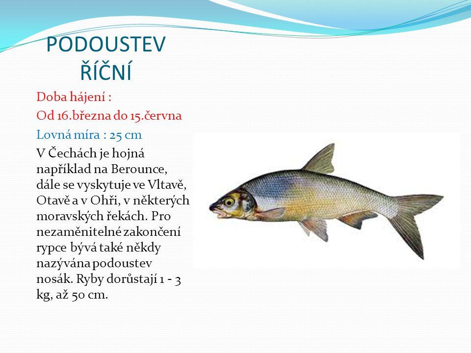 LÍN OBECNÝ Doba hájení : Nemá dobu hájení Lovná míra : 20 cm Lín je typickou rybou stojatých a pomalu tekoucích vod.