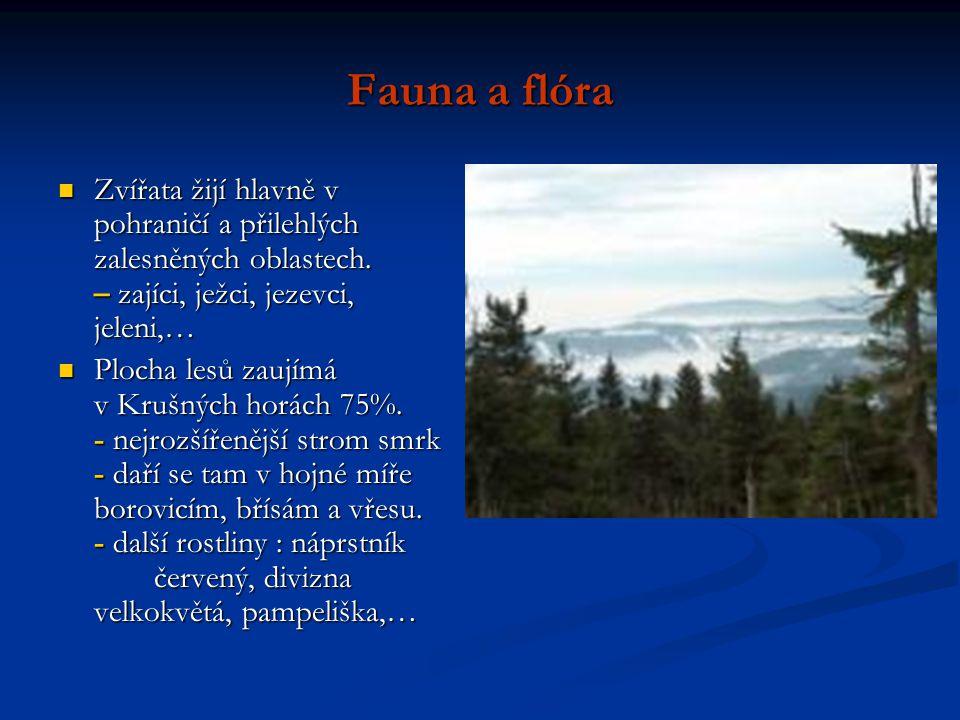 Fauna a flóra Zvířata žijí hlavně v pohraničí a přilehlých zalesněných oblastech. – zajíci, ježci, jezevci, jeleni,… Zvířata žijí hlavně v pohraničí a