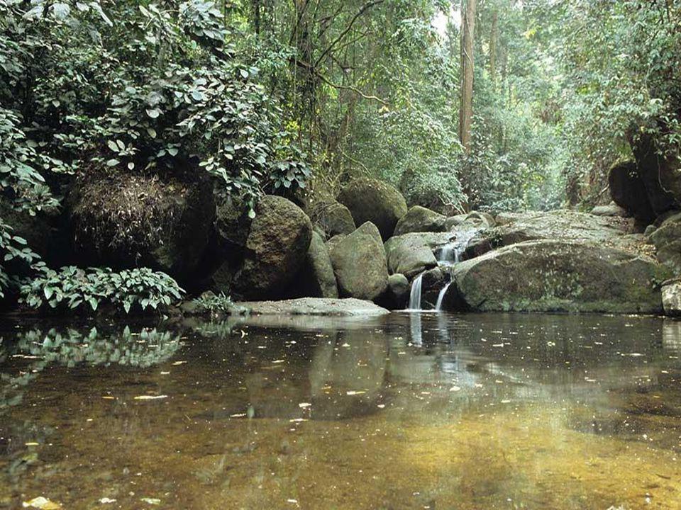 Klima: Tropický pás Klima: Tropický pás Fauna: kůň, velbloud jednohrbý, šimpanzi, žirafy, antilopy, afričtí sloni, hroch, divoká prasata, lvi, krokodýli Fauna: kůň, velbloud jednohrbý, šimpanzi, žirafy, antilopy, afričtí sloni, hroch, divoká prasata, lvi, krokodýli Využití plochy: pastviny (45%), orná půda (32%), lesy (13%), ostatní (10%) Využití plochy: pastviny (45%), orná půda (32%), lesy (13%), ostatní (10%) Roční teploty: S….21,5°C až 31,3°C Roční teploty: S….21,5°C až 31,3°C JZ…24°C až 28,6°C JZ…24°C až 28,6°C