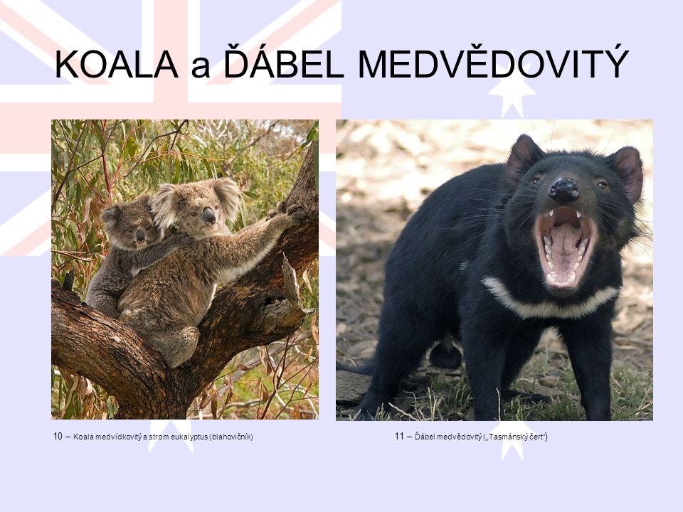 """KOALA a ĎÁBEL MEDVĚDOVITÝ 10 – Koala medvídkovitý a strom eukalyptus (blahovičník) 11 – Ďábel medvědovitý (""""Tasmánský čert"""" )"""