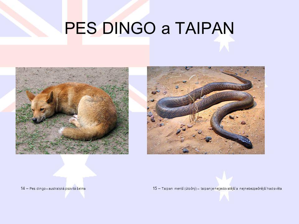 PES DINGO a TAIPAN 14 – Pes dingo – australská psovitá šelma 15 – Taipan menší (útočný) – taipan je nejjedovatější a nejnebezpečnější had světa