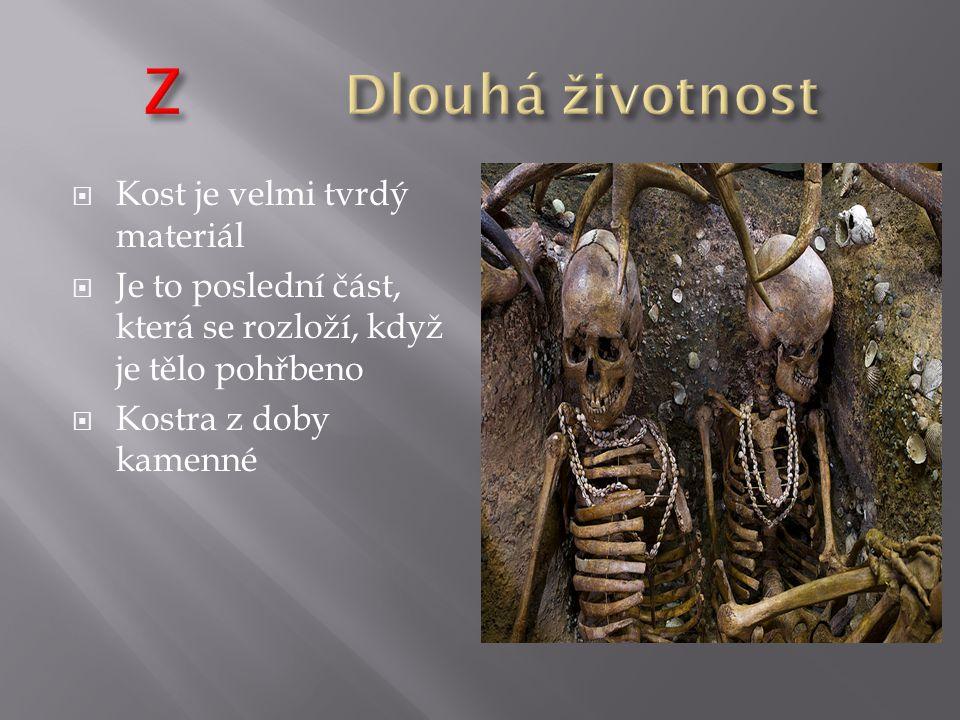  Kost je velmi tvrdý materiál  Je to poslední část, která se rozloží, když je tělo pohřbeno  Kostra z doby kamenné