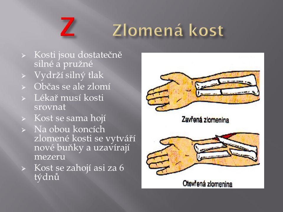  Kosti jsou dostatečně silné a pružné  Vydrží silný tlak  Občas se ale zlomí  Lékař musí kosti srovnat  Kost se sama hojí  Na obou koncích zlome