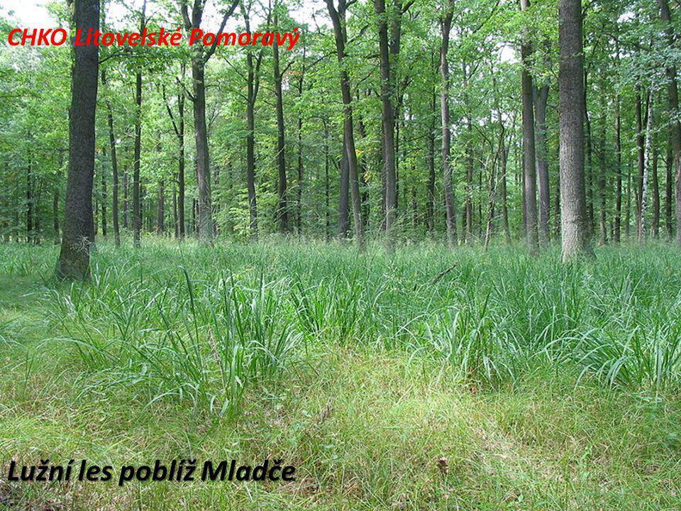 Lužní les poblíž Mladče CHKO Litovelské Pomoravý