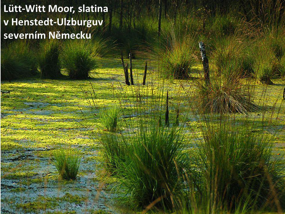 Lütt-Witt Moor, slatina v Henstedt-Ulzburguv severním Německu