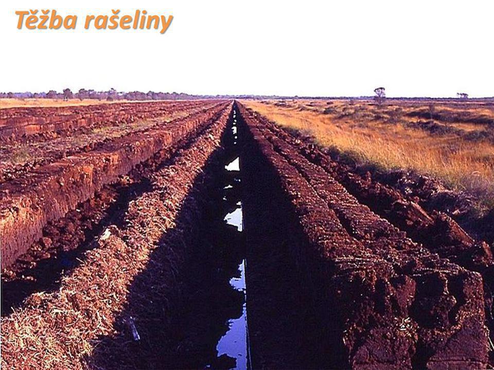 Těžba rašeliny