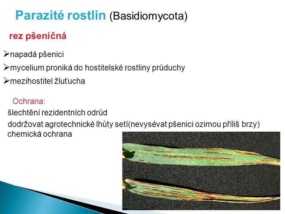  mycelium proniká do hostitelské rostliny průduchy  mezihostitel žluťucha rez pšeničná  napadá pšenici Parazité rostlin (Basidiomycota) Ochrana: šl
