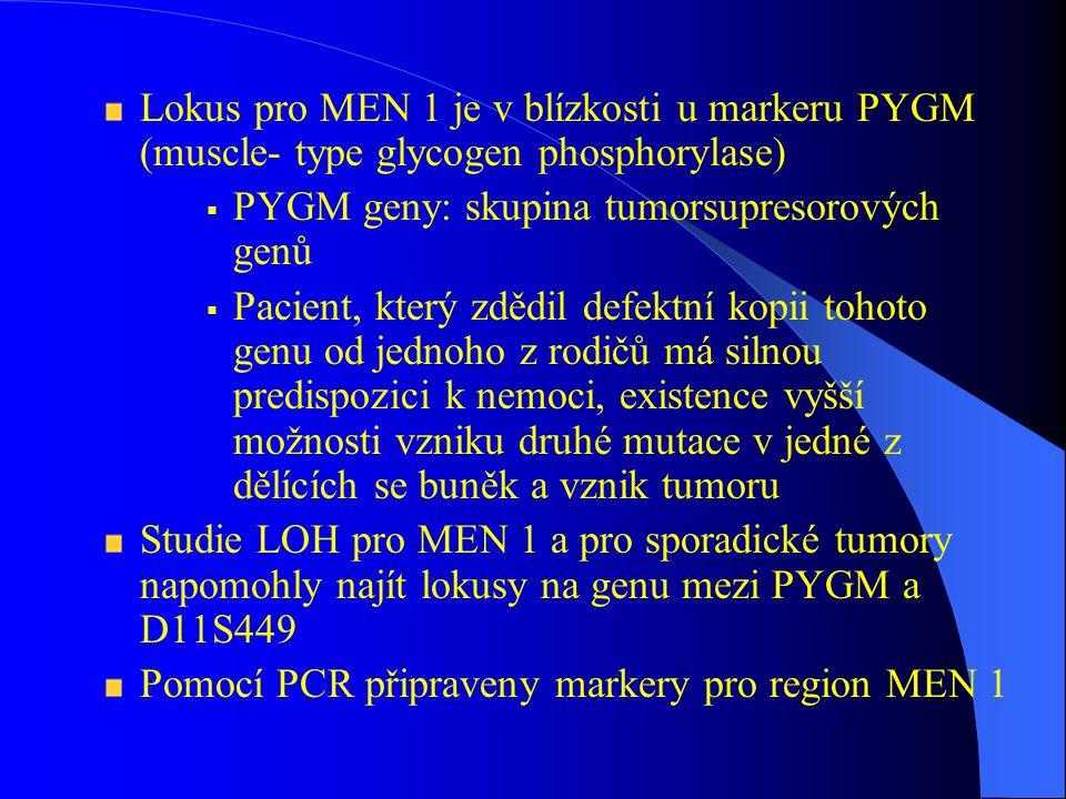 Lokus pro MEN 1 je v blízkosti u markeru PYGM (muscle- type glycogen phosphorylase)  PYGM geny: skupina tumorsupresorových genů  Pacient, který zdědil defektní kopii tohoto genu od jednoho z rodičů má silnou predispozici k nemoci, existence vyšší možnosti vzniku druhé mutace v jedné z dělících se buněk a vznik tumoru Studie LOH pro MEN 1 a pro sporadické tumory napomohly najít lokusy na genu mezi PYGM a D11S449 Pomocí PCR připraveny markery pro region MEN 1