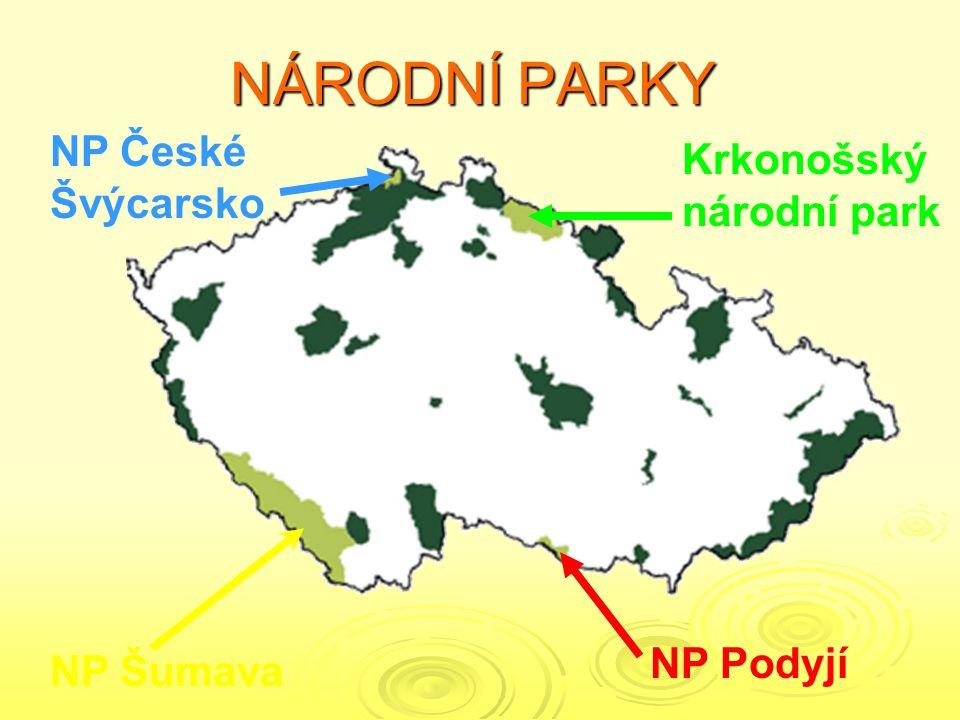 KRNAP Rozloha – 385 km² Založeno – 1963 Zvonek český Hořec tolitovitýLiška obecná Tetřev hlušec Porosty kleče Sněžka