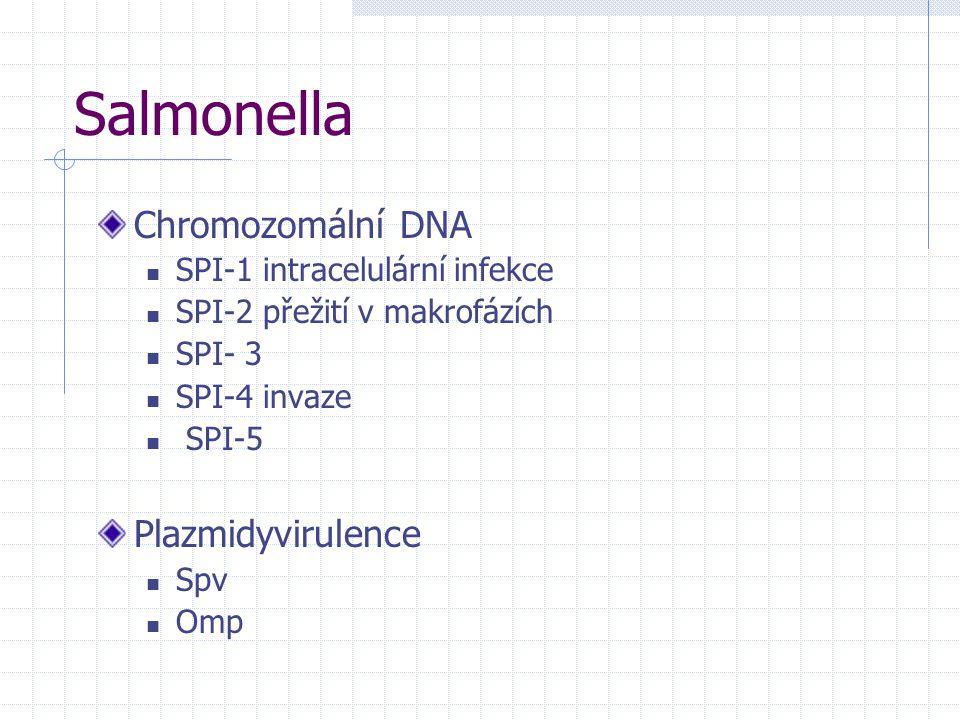 Salmonella Chromozomální DNA SPI-1 intracelulární infekce SPI-2 přežití v makrofázích SPI- 3 SPI-4 invaze SPI-5 Plazmidyvirulence Spv Omp