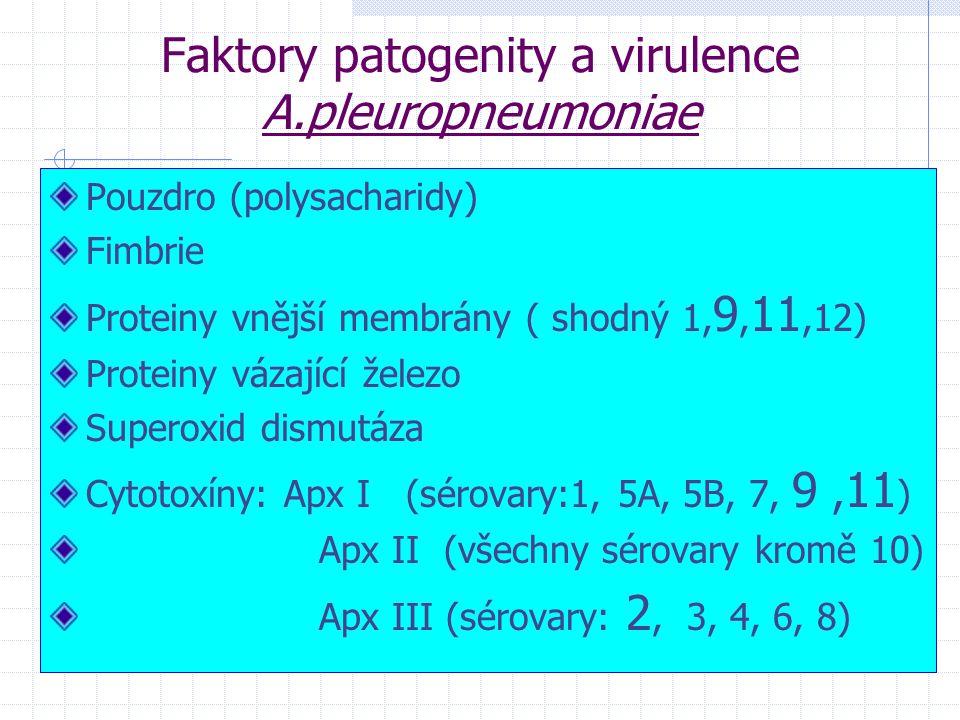 Faktory patogenity a virulence A.pleuropneumoniae Pouzdro (polysacharidy) Fimbrie Proteiny vnější membrány ( shodný 1, 9, 11,12) Proteiny vázající žel